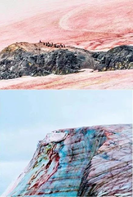 """南极又现""""西瓜雪"""":或因温度升高藻类快速繁殖,需敲响警钟"""